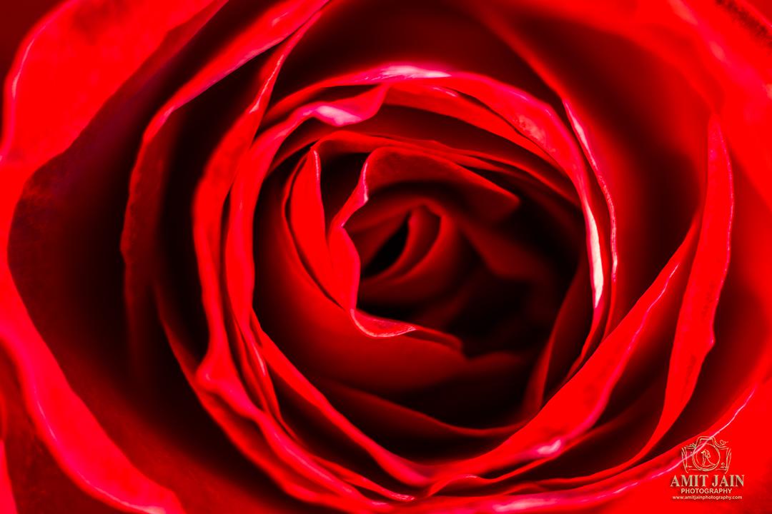 Parnell Rose Garden Auckland